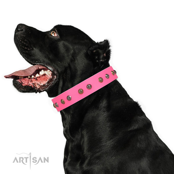 Stylish walking studded dog collar made of reliable leather