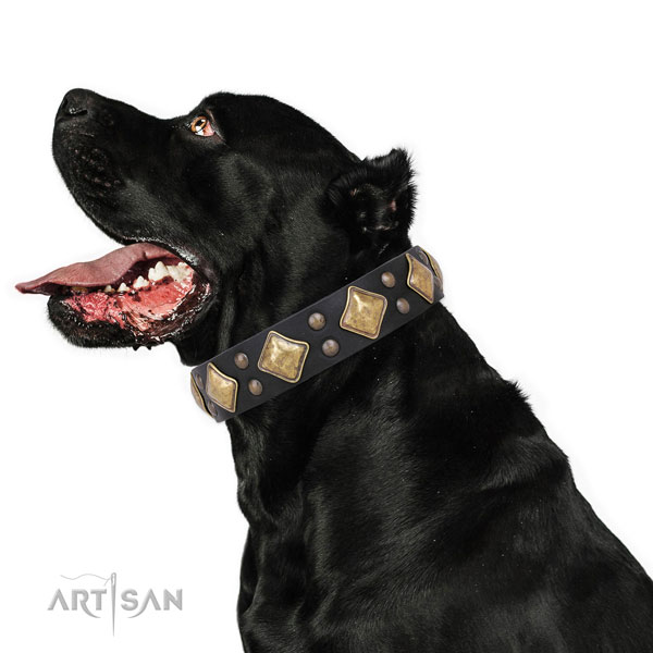 Fancy walking decorated dog collar made of top notch leather