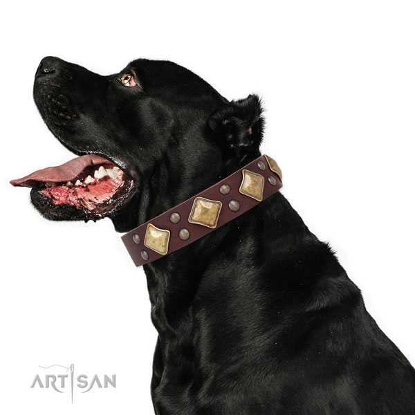 Handy use adorned dog collar made of durable natural leather