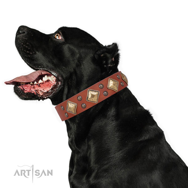 Comfortable wearing studded dog collar made of strong genuine leather