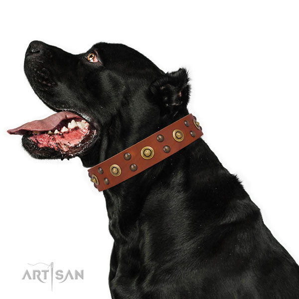 Everyday walking dog collar with remarkable studs
