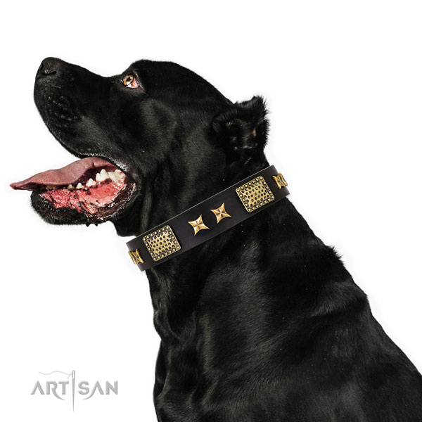 Daily walking dog collar with remarkable adornments