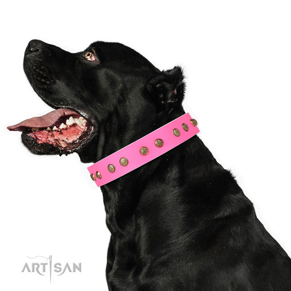 Impressive embellishments on comfortable wearing genuine leather dog collar