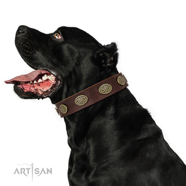 Top notch embellishments on easy wearing full grain genuine leather dog collar