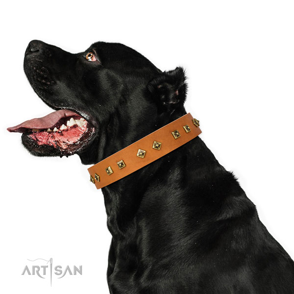 Remarkable embellishments on everyday use dog collar