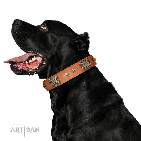 Comfortable wearing dog collar of leather with fashionable decorations
