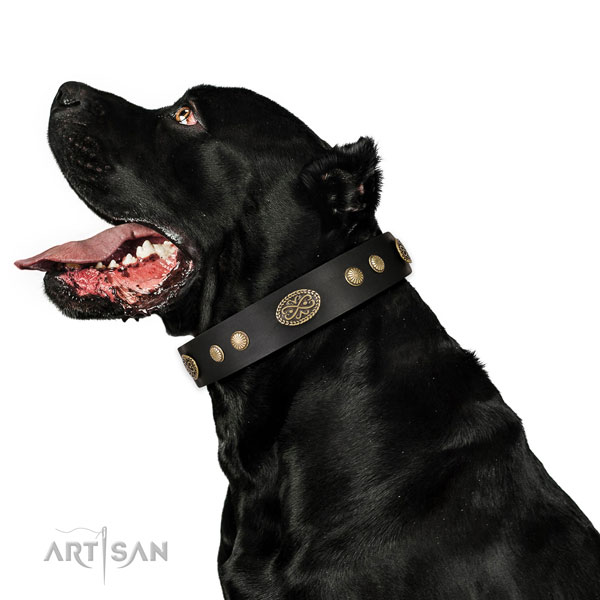 Corrosion resistant fittings on leather dog collar for basic training