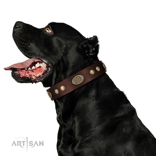 Strong D-ring on full grain natural leather dog collar for basic training