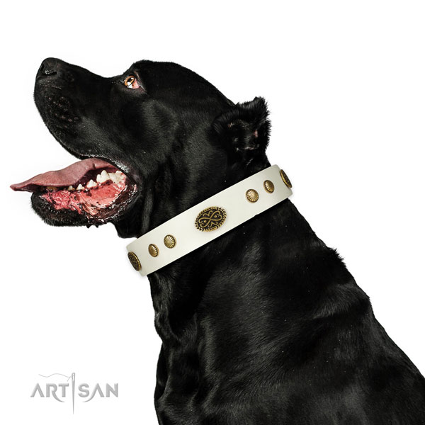 Rust-proof D-ring on full grain leather dog collar for basic training