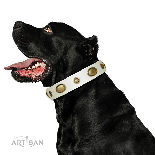 Daily walking dog collar of leather with unusual adornments