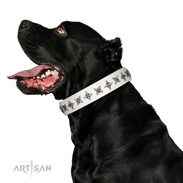 Finest quality full grain natural leather dog collar with extraordinary adornments