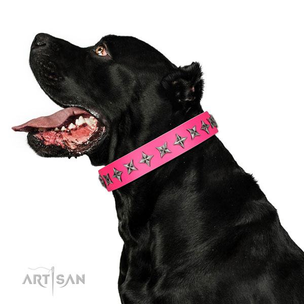 Top notch genuine leather dog collar with inimitable adornments