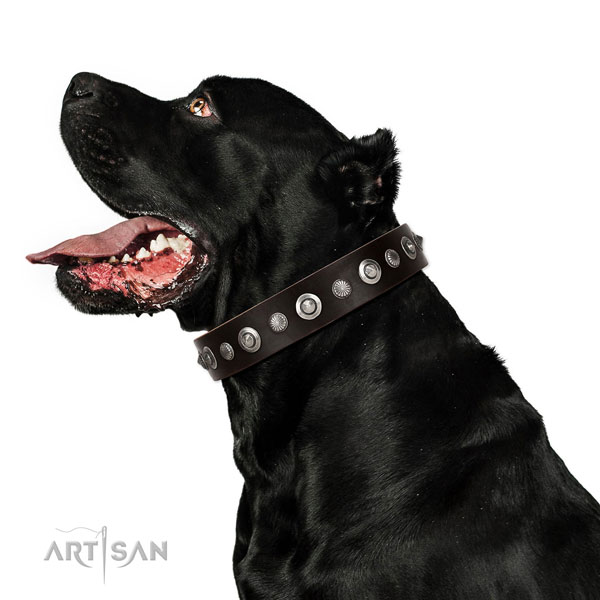 Durable genuine leather dog collar with awesome adornments
