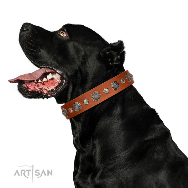 Easy to adjust genuine leather dog collar with corrosion resistant fittings