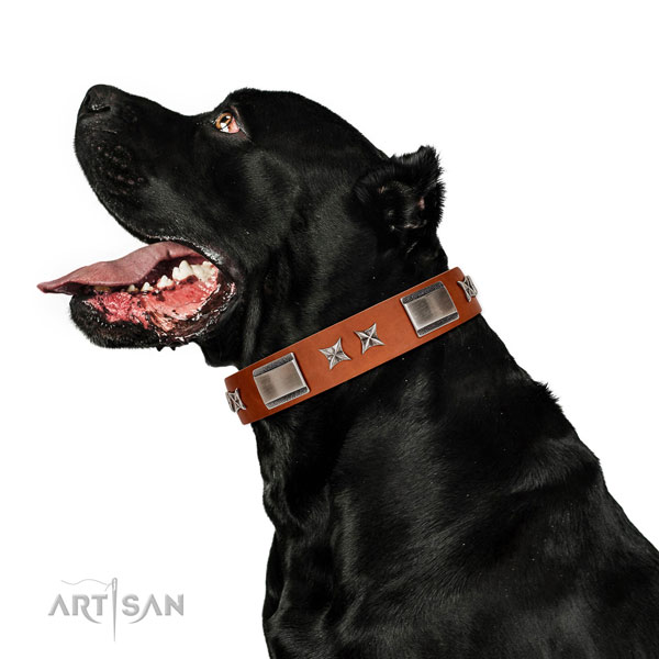 Stylish walking top notch full grain natural leather dog collar with decorations