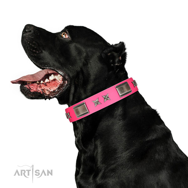 Convenient collar of leather for your canine