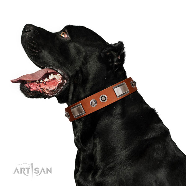 Designer full grain natural leather collar with decorations for your canine