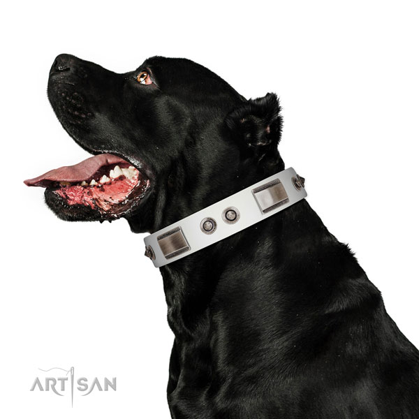 Impressive genuine leather dog collar with adornments