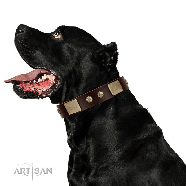 Reliable hardware on full grain natural leather dog collar for everyday walking