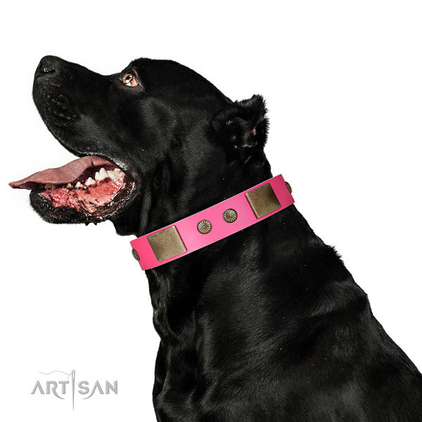 Strong fittings on genuine leather dog collar for everyday use