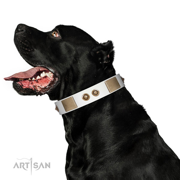 Comfy wearing dog collar of leather with designer adornments