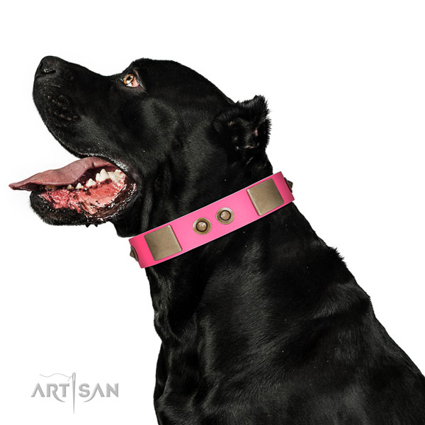 Handy use dog collar of genuine leather with fashionable adornments