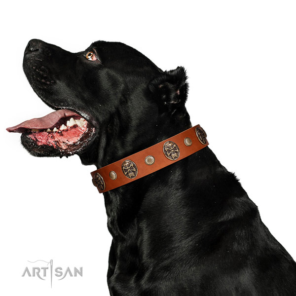 Full grain leather dog collar with exceptional decorations