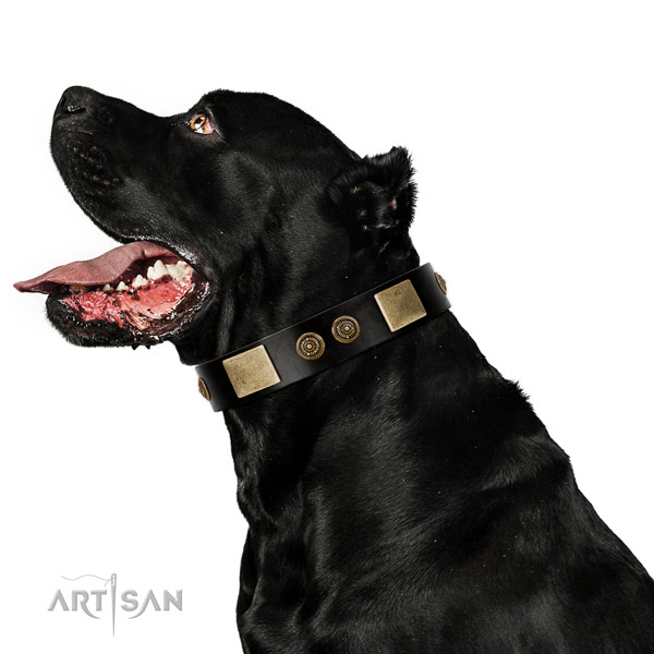 Reliable fittings on natural leather dog collar for stylish walking