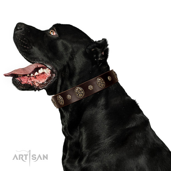 Fancy walking dog collar of leather with unusual embellishments