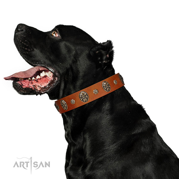 Handy use dog collar of natural leather with inimitable decorations