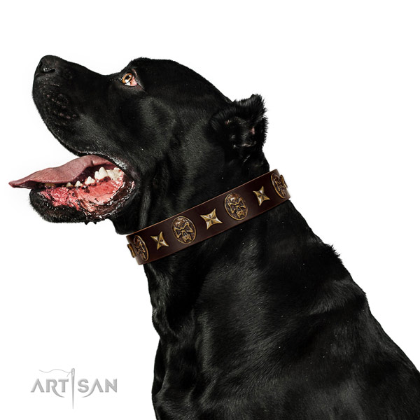 Easy wearing dog collar of genuine leather with awesome adornments