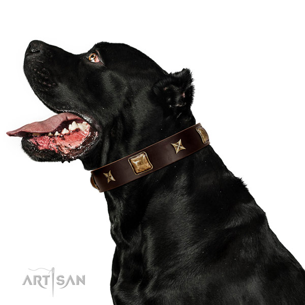 Easy to adjust genuine leather dog collar with embellishments