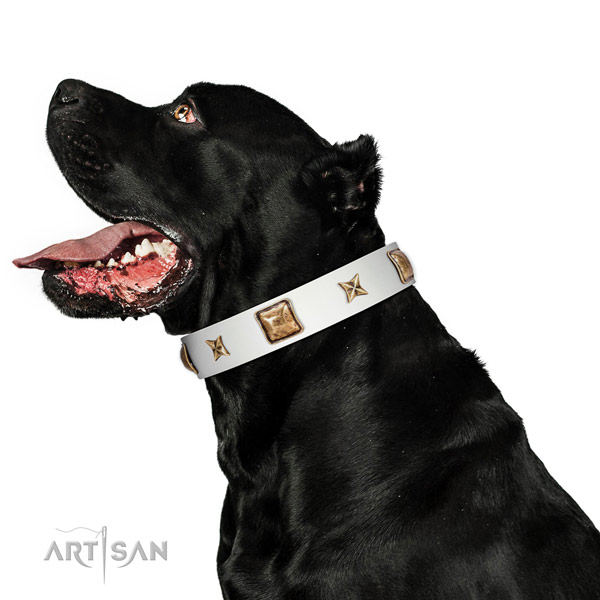 Incredible full grain natural leather dog collar with studs