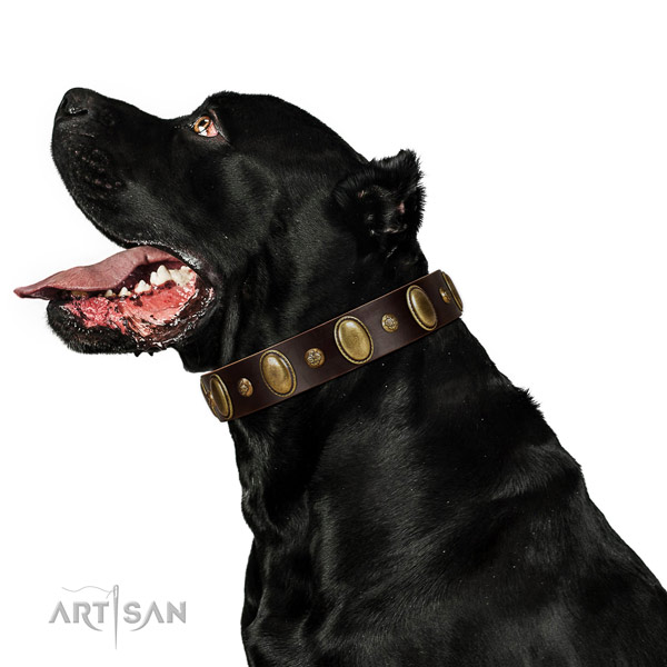 Full grain leather dog collar of top notch material with incredible decorations