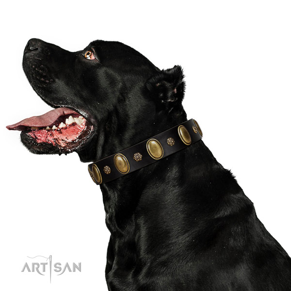 Handy use soft full grain leather dog collar with adornments