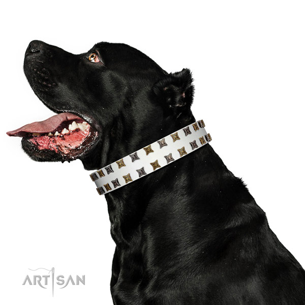 Gentle to touch full grain leather dog collar with decorations for your canine