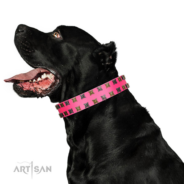 Reliable full grain leather dog collar with adornments for your canine