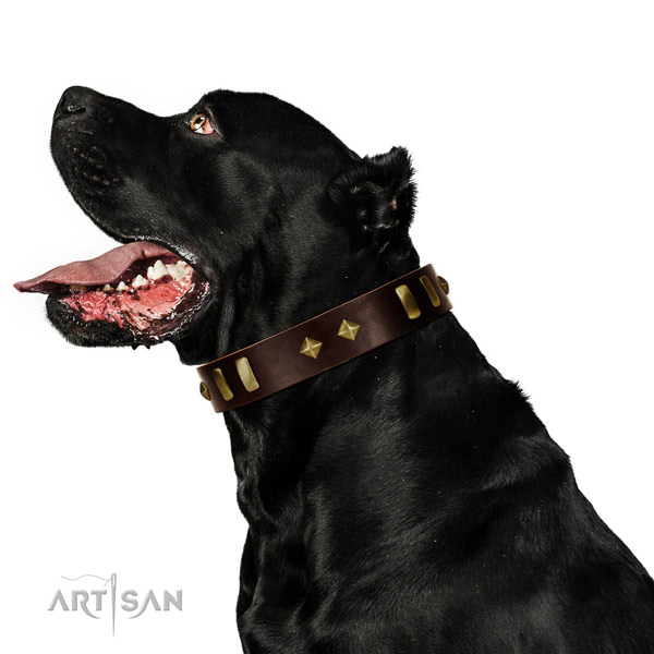 Full grain leather dog collar with inimitable studs for comfortable wearing