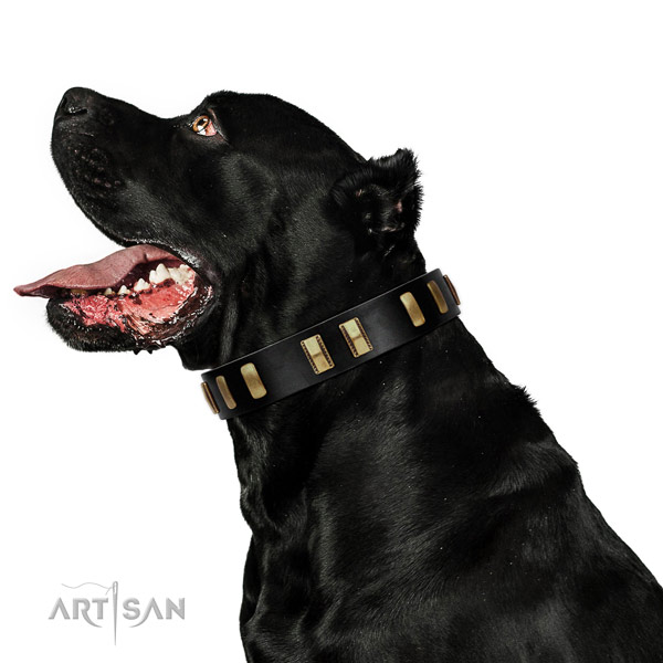 Genuine leather dog collar with significant adornments for everyday use