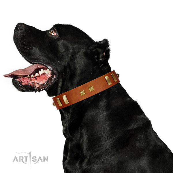 Trendy decorated natural leather dog collar of soft to touch material