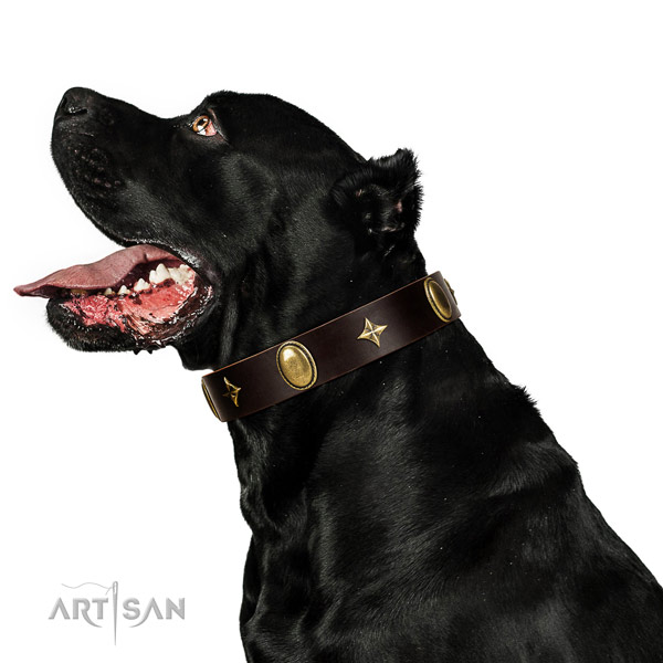 Gentle to touch full grain leather dog collar with rust resistant fittings