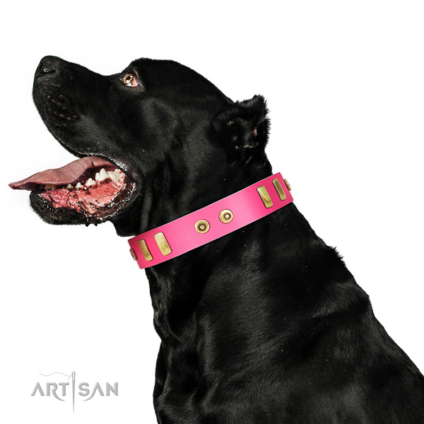 Designer embellished full grain natural leather dog collar of top notch material
