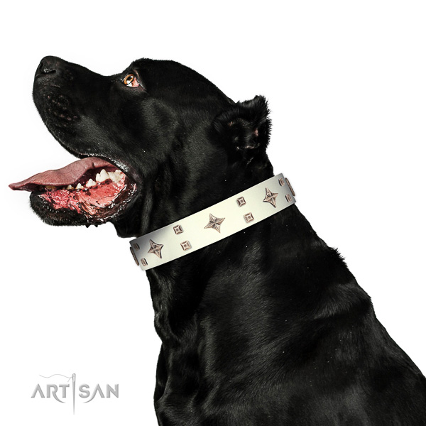 Full grain genuine leather dog collar of flexible material with inimitable adornments