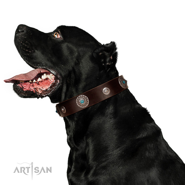 Top notch full grain leather dog collar with designer embellishments