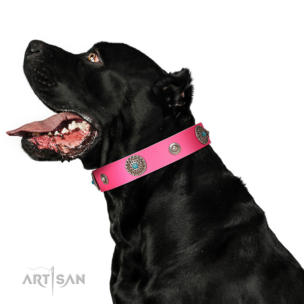 Easy wearing dog collar of full grain leather with embellishments