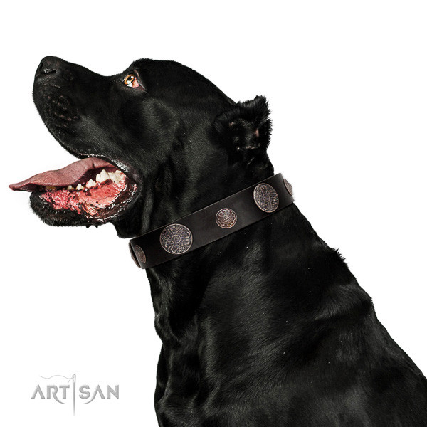 Leather dog collar with rust-resistant hardware for safe canine control