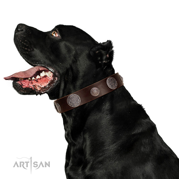 Leather dog collar with non-corrosive details for safe pet handling