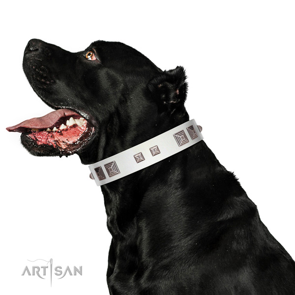 Full grain leather dog collar of flexible material with trendy embellishments