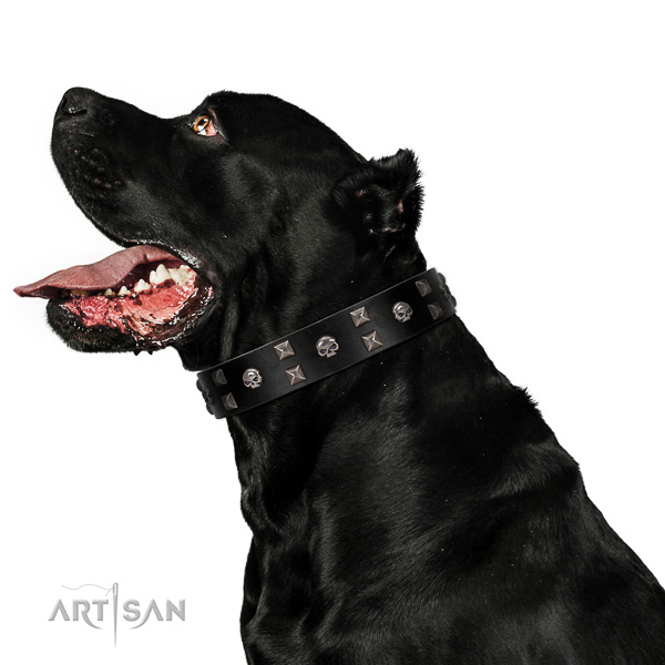 Full grain genuine leather dog collar of gentle to touch material with fashionable studs