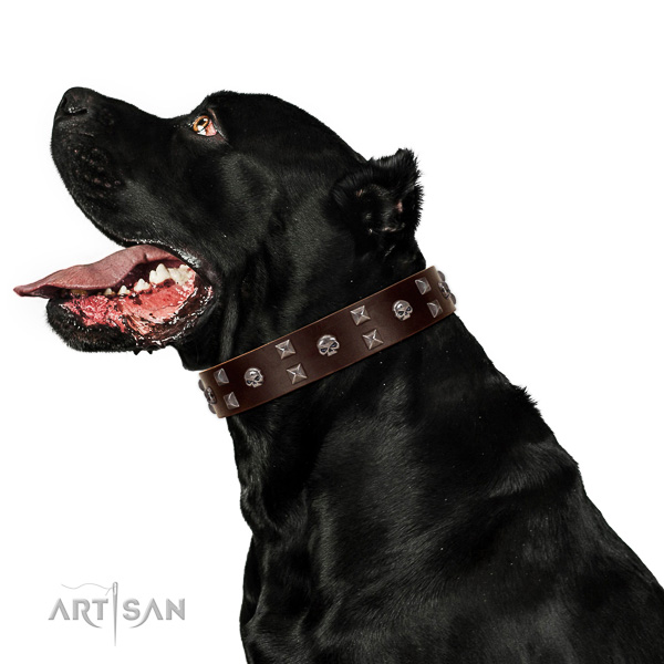 Inimitable full grain leather dog collar with corrosion resistant fittings